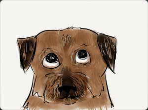 kid-friendly colour illustration of Border Terrier's head